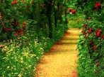 lif_20050428_path111111.jpg