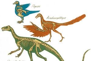 南韓教育與科學技術局透露,出版商將生產修訂版的教科書,其中不再有馬或始祖鳥進化的例子。 <br/>