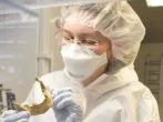 论文的第一作者、德国图宾根大学的Verena J.Schuenemann在检查人骨样品。