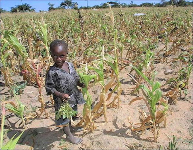 津巴布韋遭遇乾旱襲擊。(圖:網絡圖片)