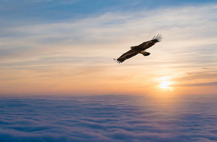 耶和華如鷹背負子民展翅。(圖: Getty Images )