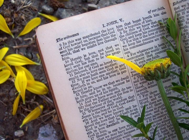 確診者盼望從聖經尋求安慰。(圖:FreeImage)