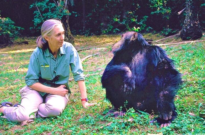 珍·古德在貢貝溪國家公園與黑猩猩Wilkie。(圖: Jane Goodall Institute)