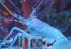 龍蝦.jpg