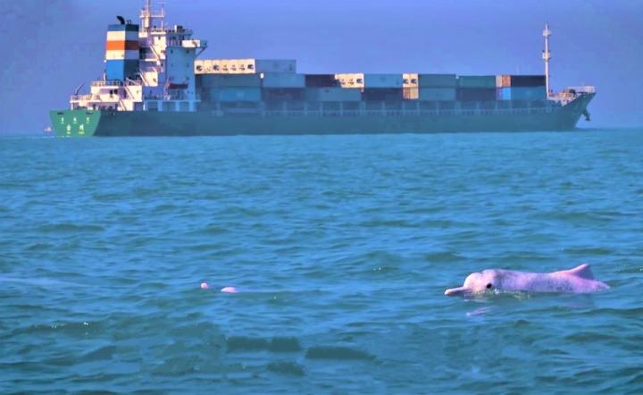 記錄片《聲之海》:中華白海豚棲息處有貨輪駛近。(圖:《聲之海》擷圖)
