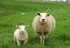 一領一尋羊.jpg