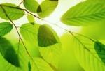 lif_20061009_leaves.jpg